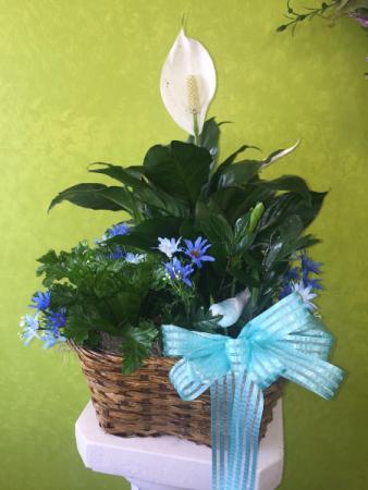 Triple plant basket