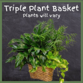 Triple Plant Basket