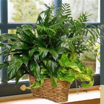 Large Planter-Designer Selected Container