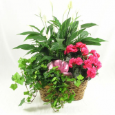 Triple Plant Basket Blooming & Green Plants