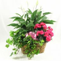Triple Plant Basket Blooming & Green Plants