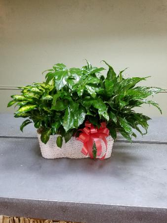 Triple Planter Plant