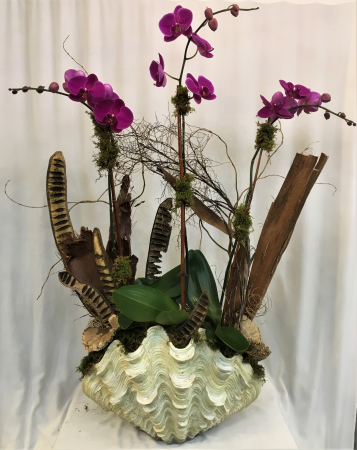Triple Purple Orchid Plant in Large Sea Shell