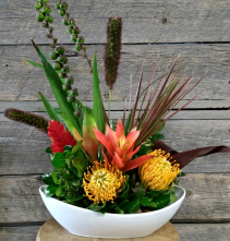Tropic Delight Container