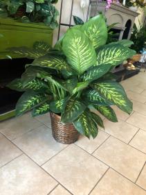 Tropic Snow Plant