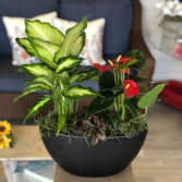 Tropical Anthurium Dish Garden