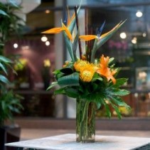 Tropical Artistry Arrangement