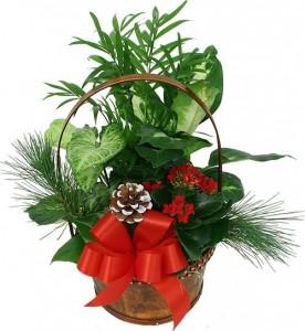 Tropical Basket For Christmas