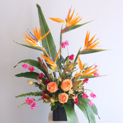 Tropical Bliss LOCAL DELIVERY ONLY