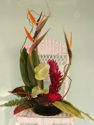 Tropical Breeze Stylized arrangement in Henderson, TX | RAYFORD FLORIST & GIFTS