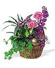 Blooming Basket Athens paradise