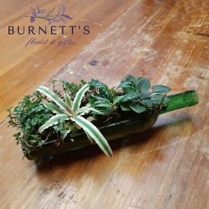 Tropical Cheers Planter in Kelowna, BC | Burnett's Florist