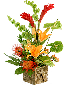 Tropical Delight  in Coral Springs, FL | DARBY'S FLORIST