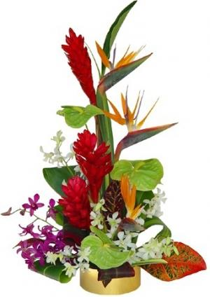 TROPICAL DELIGHTS ARRANGEMENT in Garrett Park, MD | ROCKVILLE FLORIST & GIFT BASKETS