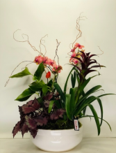 Tropical Dish Garden Dish Garden of Plants with Orchid