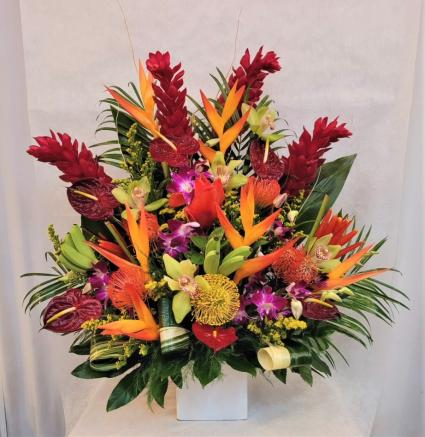 Tropical Explosion Arrangement