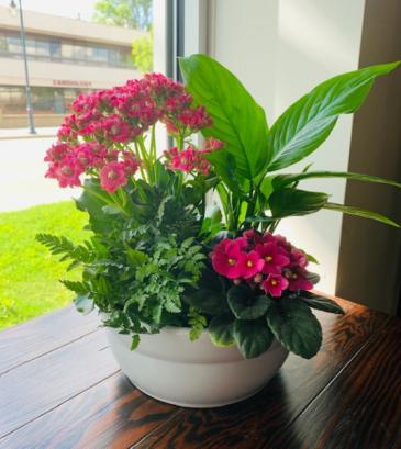 Tropical Flowering Garden  Plants