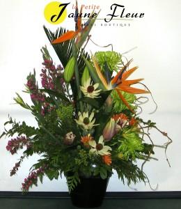 Tropical-Grand Finale