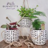 Tropical Hanging Pot Plant