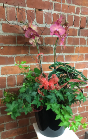 Tropical Jungle Sophisticated Planter in Naugatuck, CT | TERRI'S FLOWER SHOP