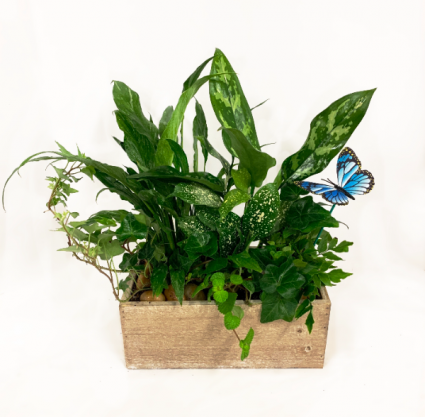 Tropical Kiss Planter