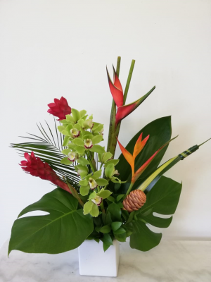 Tropical Orchid Cube in Tamarac, FL | Yosvi Flowers