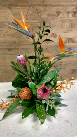 Tropical paradise Contemporary Arrangement