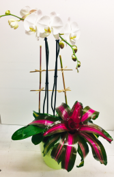 Tropical Paradise Orchid and Bromelaid