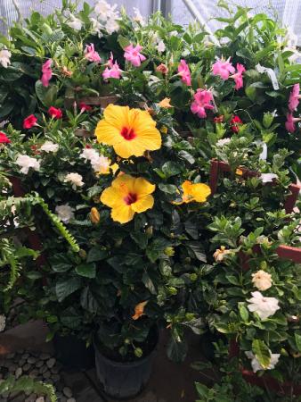 Tropical Patio Plants  Tropical Annuals For Sun