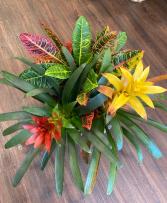 Tropical Plant Garden Plant