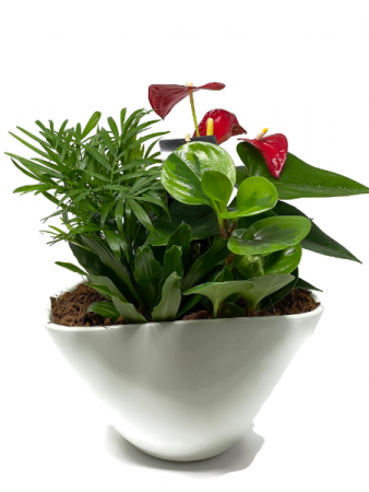 Tropical Planter - Oval