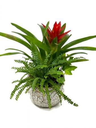 Tropical Planter M