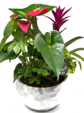 Tropical Planter L