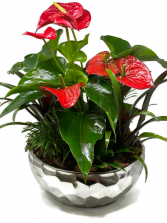 Tropical Planter XL