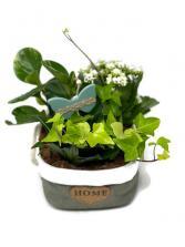 Tropical Planter - S