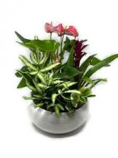Tropical Planter Ceramic