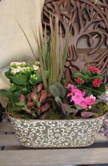 Tropical Planter Plant