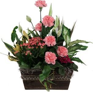 Tropical Garden Planter