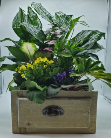 Tropical Planter Plants