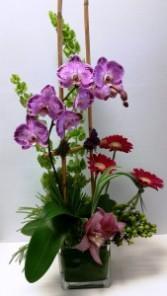 Tropical Sensation Tropical arrangement