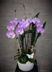 TROPICAL SUMMER Orchid Planter