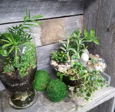 Tropical Terrarium Love Plants
