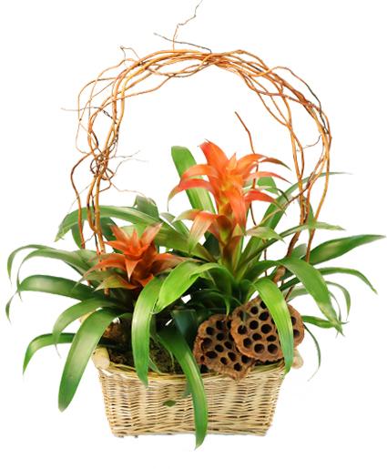 Tropical Ties Blooming Plants