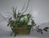 TROPICAL WINDOW BOX Dish Garden