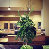 Tropicals and Feathers Fresh