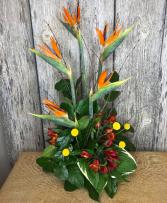 Tropicana  Floral Design
