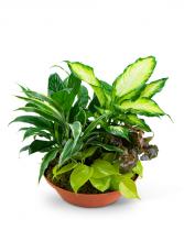 Tropics in Terracotta Plant