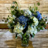 True Blue  Hydrangeas