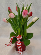 Truly Tulips  Cut Tulips