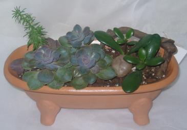 TUB OF SUCCULANTS Dish Garden